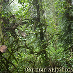07 Viajefilos en Australia. Dorrigo Rainforest NP 17