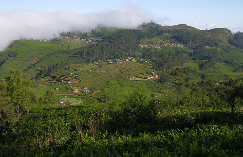 trip morning vacation sunrise dawn december view tea seat january adventure sri lanka plantation vista srilanka ceylon overlook viewpoint lipton teaplantation liptons plantations teaplantations liptonsseat