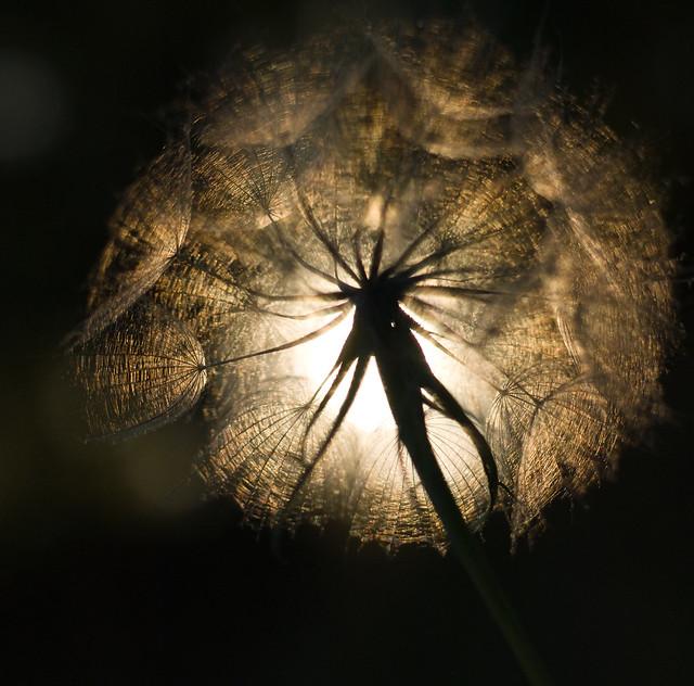 seed pod in the sun