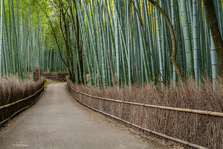 The Bamboo Forest at Arashiyama Park - Kyoto, Japan | by Phil Marion (176 million views - THANKS)