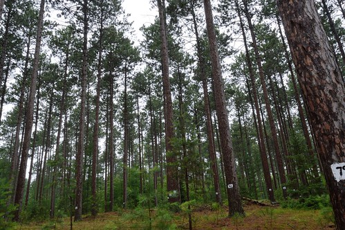 county red lake pine wisconsin forest star highlands state demonstration northern vilas