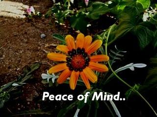 Peace Of Mind | by Iqbal Osman1
