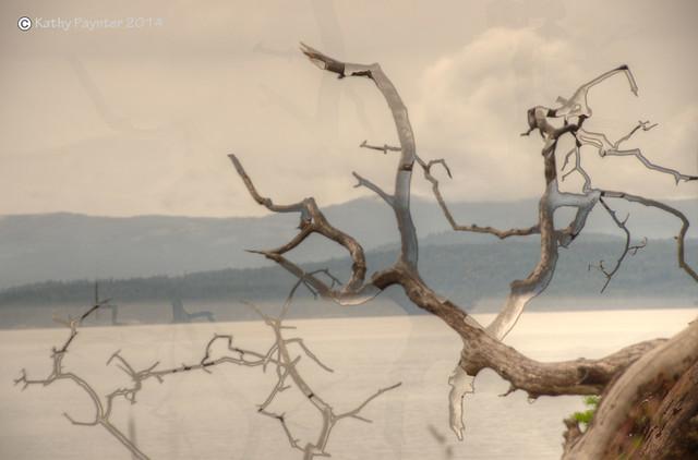 Abstract Arbutus Antler Tree