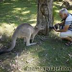 01 Viajefilos en Australia. Morriset 09