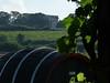 Valtice – v pozadí kolonáda na Reistně, foto: Petr Nejedlý