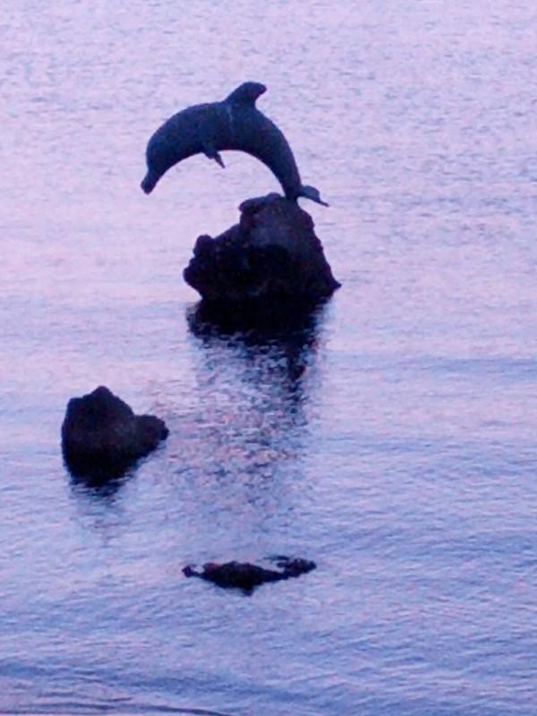 Portotorres - Il delfino