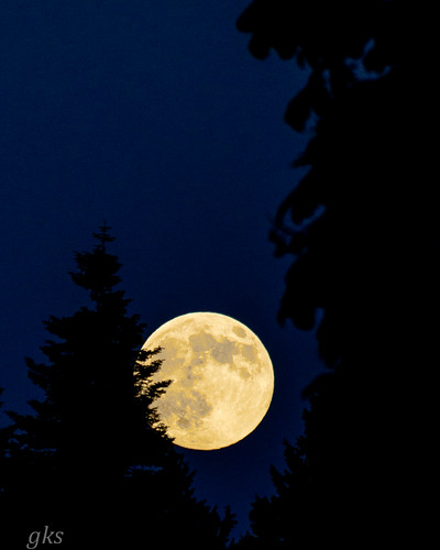 Super Moon framed by trees, Crescent Beach, BC (hand-held 70-300m lens) | by gks18