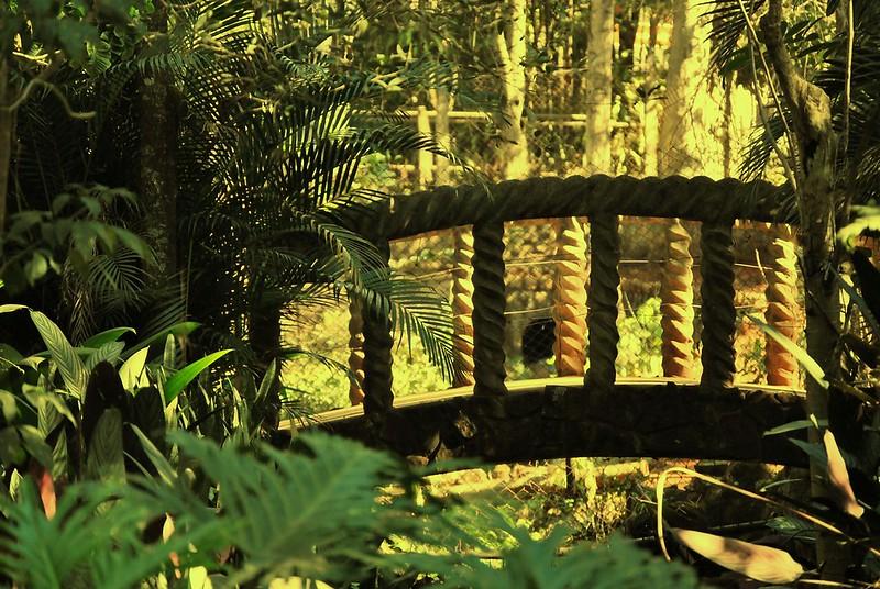 Pequeno Bosque