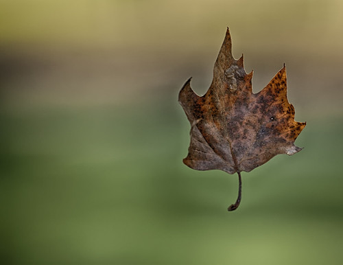 blowing in the wind | by Anne Davis 773