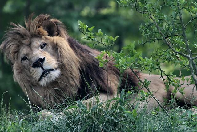 Parc zoologique de Paris 13.06.2015 IMG_1311