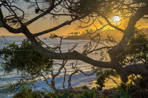 ocean california trees sunset tree geotagged evening nikon hdr lagunabeach nikond5300