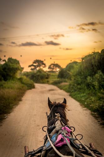 Horse Cart in Bagan | by tehhanlin