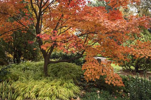 autumn landscape parks smcpda1855mmf3556alii pentaxk01 pentaxart