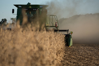 Soybean Harvest | by UnitedSoybeanBoard