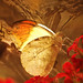 On golden wings by ♥Adriënne - for peace! -