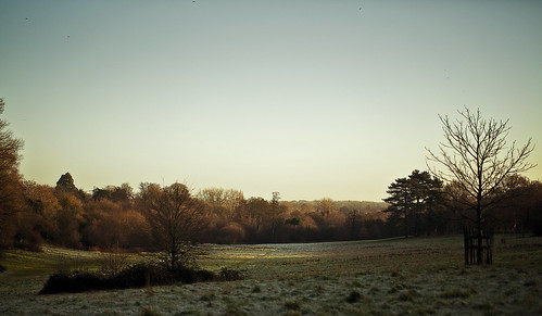 park trees cold tree ice grass forest sunrise frozen woods warm view hill meadow farnham canon5dmarkiii