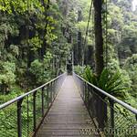 07 Viajefilos en Australia. Dorrigo Rainforest NP 45