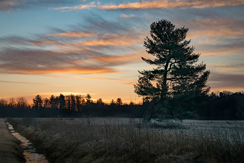 canoneos5dmarkiv ditch pine tree winter sunrise michigan midmichigan february field campo weeds amanecer
