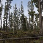 Forest on Birch Hills