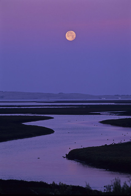 Full Moon Over Los Osos Creek Entering the Bay at Dawn