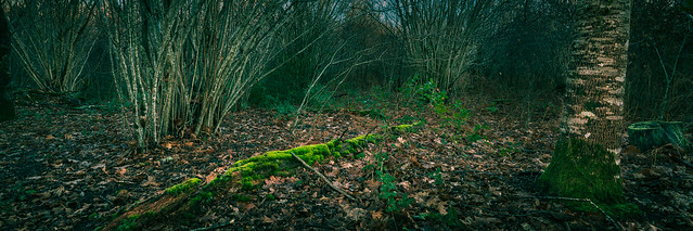 Dark undergrowth