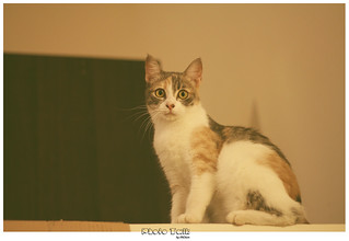 Momo ——  The `Kitten`   by PhotoTalk By AhChien