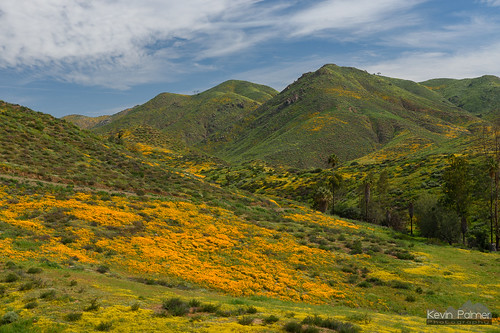 lakeelsinore california hills green flowers wildflowers bloom blooming poppies orange grass march spring sunny sunshine blue sky clouds nikond750 tamron2470mmf28 trees palmtrees walkercanyon