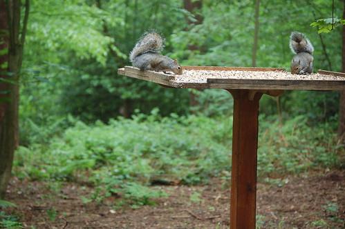 Eichhörnchens Mahlzeit