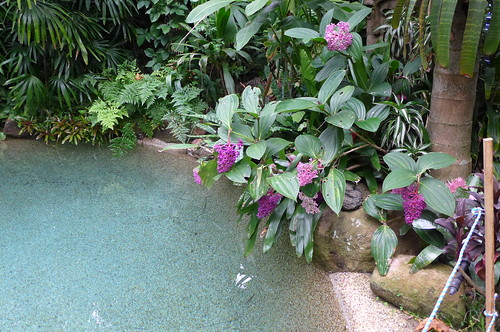 hundschiedt garden tropicalstylegarden tropicallandscaping tropicalesque balinesestyle brisbane sunnybank australia tanetahi