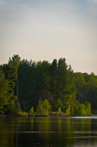 trees sunset sky plants lake water pine forest landscape evening spring woods michigan grow tamarack