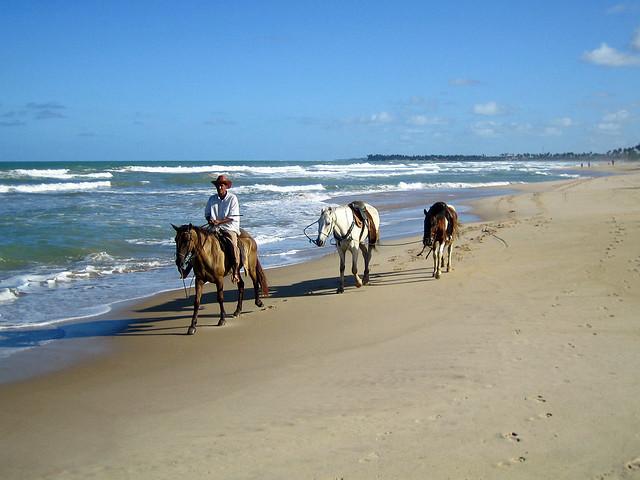 Horses on the beach - Puerto de Galinhas, Brazil