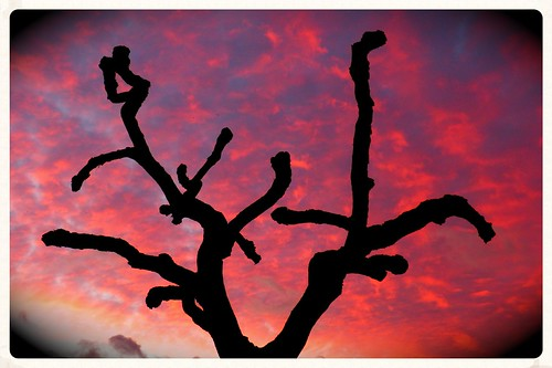 tree sunrise dawn bare branches redsky