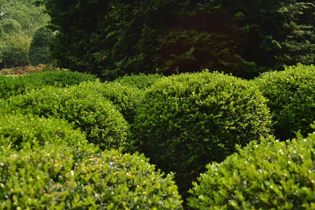 Deer-Resistant Plants: Shrubs and Trees for the Deer-Plagued