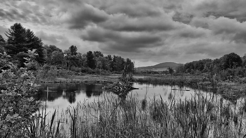 county trees light blackandwhite white newyork black tree nature water beauty clouds unitedstates background hill dramatic peaceful hills serene marsh ithaca tranquil tompkins dramati