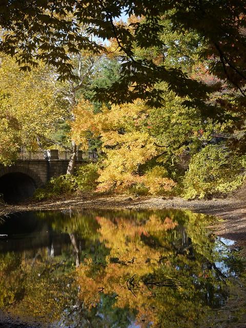 日, 2013-11-03 14:11 - Bronx Botanical Gardenの紅葉