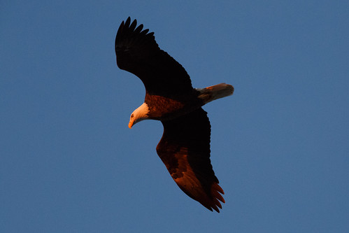sunset bird landscape baldeagle melvinpricelocksanddam