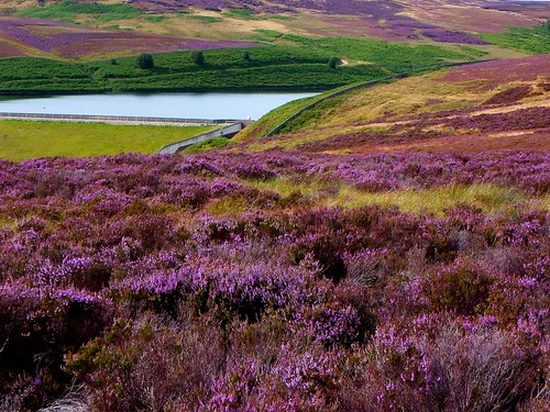 nature water rural landscape heather yorkshire moors 1001nights moorland infinitexposure