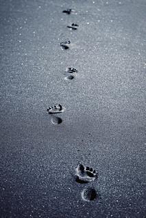 ~ Footprints ~ | by Flick Vlooi