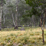 02 Viajefilos en Australia. Barrington NP 14