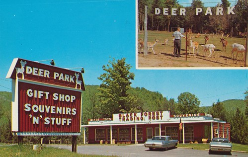 vintage pennsylvania postcard blackforest giftshop ulysses deerpark tradingpost