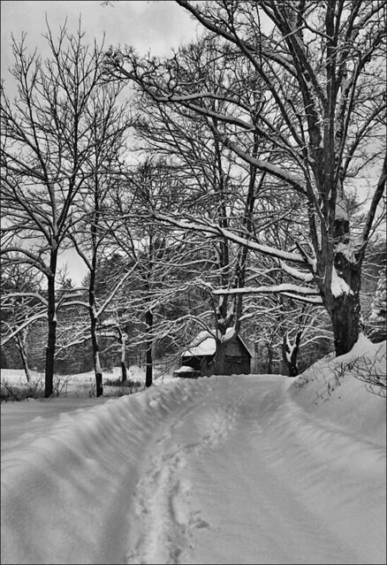Snowstorm Pax View West