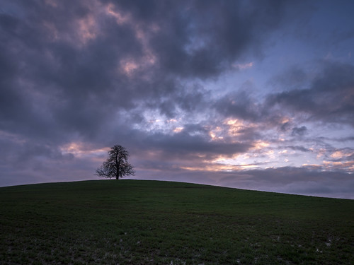morning tree field sunrise landscape lumix dawn countryside day cloudy olympus panasonic lone lonely grad oxfordshire dmc oxon m43 mft gnd gh3 southnewington leefilters damianward ©damianward micro43 microfourthirds 918mm mzuikodigitaled soft06