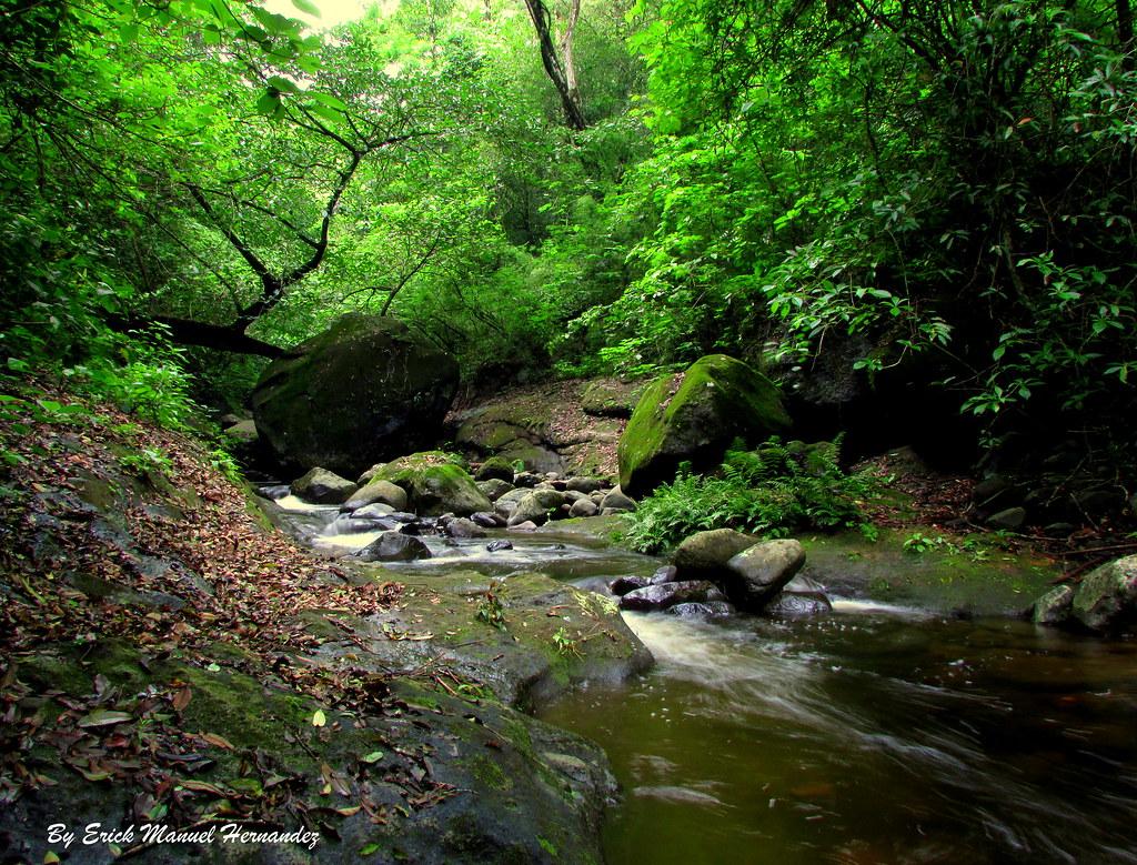 Rio Venado En El Bosque Imposible El Imposible Es El Parqu Flickr
