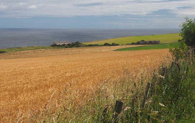 The Berwickshire coast path near Red Heugh