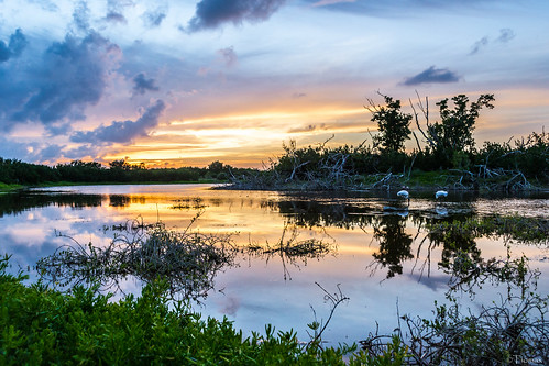 Sunset in the Glades.   by Tiomax80