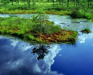 the bog IV | by redmetalzero