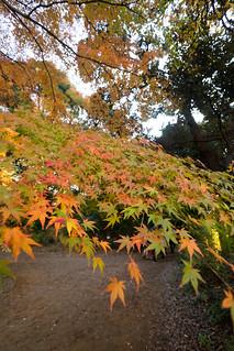 DSC_A99_02916.jpg   by jorge.kashima