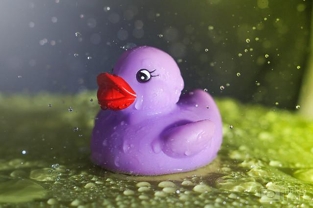 Mo, 2014-01-20 18:57 - Auch Enten wollen mal duschen statt baden! Mal ein etwas anderes Makrofoto! Hab mit Wasser und entfesseltem Blitz experimentiert  Mehr Infos und Exif: www.makro-treff.de www.facebook.com/makrotreff