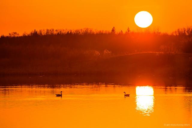 Sunset Soul Mates...