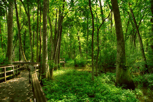 trees green nature canon rouge la woods louisiana center walkway swamp cypress baton hdr bluebonnetswamp 60d